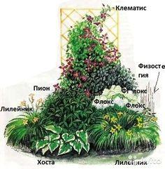 Клумба № 68,Клумба с клематисом-Использованные растения:1 Клематис 2 Пион чисто-белый махровый3 Флокс метельчатый белый4 Флок...: