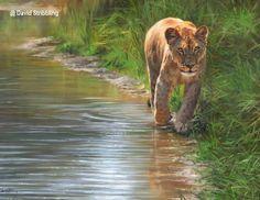 PAINTING - FEMALE LION  (Leeuw)