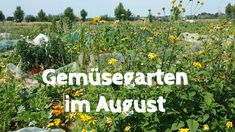 Gemüsegarten im August - Ein Gartenrundgang