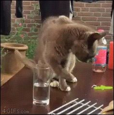 Cat Tricked by Glass of Water | The 30 Most Important Cats Of 2015