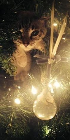 Cats love Christmas trees just as much as we do.