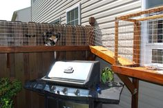 DIY outdoor cat tunnel - leads to a wire paneled house with ledges so the cats can safely lounge in the sun.