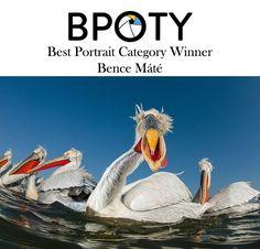 Best Portraits, Year 2016, Bird, Birds