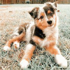 Super Cute Puppies, Baby Animals Super Cute, Cute Baby Dogs, Cute Little Puppies, Cute Dogs And Puppies, Cute Little Animals, Cute Funny Animals, Doggies, Cute Babies