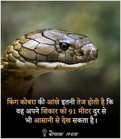Amazing Things In Hindi Gernal Knowledge, General Knowledge Facts, Knowledge Quotes, Wow Facts, Real Facts, Funny Facts, Crazy Facts, Good Life Quotes, Fact Quotes