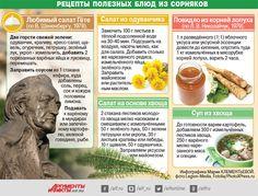 Рецепты из сорняков от профессора Татьяны Киселёвой