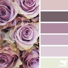 today's inspiration image for { rose tones } is by @wild_rubus ... thank you, Caroline, for another fresh + inspiring #SeedsColor image share!