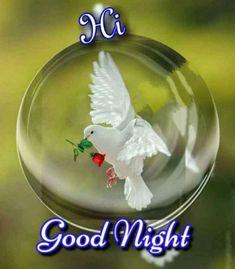 Romantic Good Morning Quotes, Good Morning Roses, Good Morning Images, Good Night Messages, Good Night Sweet Dreams, Good Night Image, Christmas Bulbs, Holiday Decor, Memes