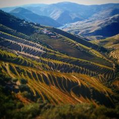 Douro valley vineyards, not for the faint of heart. #wine #extreme #portugal #portwine #travel #landscape #tourism
