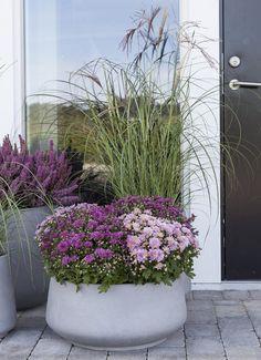 Bilderesultat for plante i krukker sommer Small Balcony Design, Small Garden Design, Front Door Christmas Decorations, Decoration Entree, Garden Planter Boxes, Summer Plants, Balcony Garden, Front Yard Landscaping, Garden Inspiration