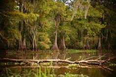 In the Swamp prints copyright Susan Bordelon 2015