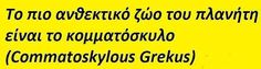 Greek, Chic, Funny, Quotes, Shabby Chic, Qoutes, Greek Language, Funny Parenting, Quotations