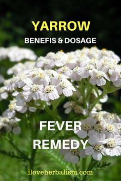 Flu Remedies Natural Remedies To Relieve Sore throats, Colds And Flu -Looking for a natural or alternative treatment for your cold or flu symptoms? Here are 8 herbs that may help relieve your symptoms. Natural Flu Remedies, Cold Home Remedies, Holistic Remedies, Natural Cures, Natural Healing, Herbal Remedies, Natural Treatments, Healing Herbs, Medicinal Plants