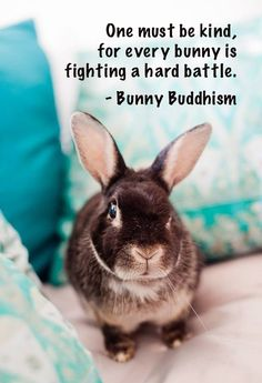 Nestor the bunny, Photo courtesy of Kim C. Click on the pic for Nestor's inspirational story!
