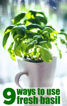 I love fresh herbs from my garden but by the end of the summer my herb garden has started to go crazy.  I'm seriously wondering what to do with fresh basil right now. I know you can add it to spaghetti sauce but really, there are only so many days a week that I want to eat spaghetti. I even have a little pot of basil growing in the kitchen for easy access.  Check out a few ways to use fresh basil