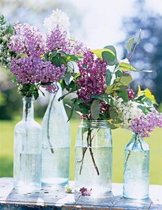 Gardening Flowers - When lilacs bloom, it's suddenly spring. With their sweet scent, pastel blooms and delicate, heart-shape leaves, they're the perfect bouquet. Lilac Wedding Flowers, Love Flowers, Fresh Flowers, Purple Flowers, Beautiful Flowers, Purple Lilac, Wedding Bouquets, Beautiful Flower Arrangements, Floral Arrangements