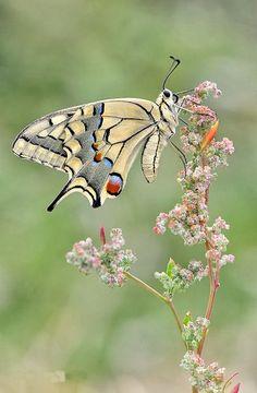 Love is a peaceful feeling, like a flower hugging a butterfly. ~Jarod Kintz