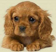 Precious. #puppies