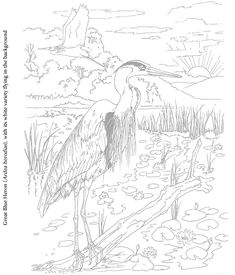 Welcome to Dover Publications Birds to paint or color