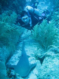 #Diving at Turneffe #Belize. Stay at the SunBreeze Suites and #Dive in beautiful #Belize!