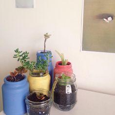 florels:  plant babies helping me study✿ insta @emmalucys