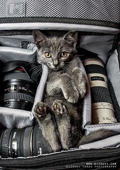 Chat pour photographe...