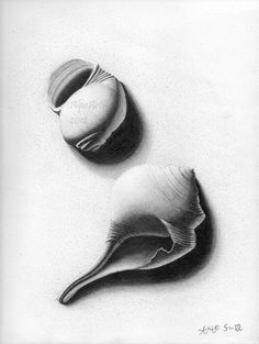 sea shell pencil drawing lifes a beach 8x10 fine art by AlpoArts, $30.00