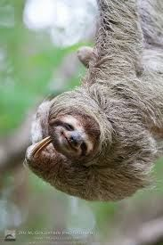 Image result for sloth photography