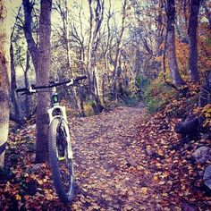 Enduring Life: Finding My Cure: One Single Track at a Time