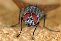 Tien ouderwetse trucs om vliegen te verjagen