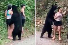 Urso chega perto de uma moça, ela mantém a calma e até registra o momento - GreenMe.com.br Animals, Stay Calm, Close Up, Loom Animals, Cutest Animals, Animaux, Animal, Animales, Animais