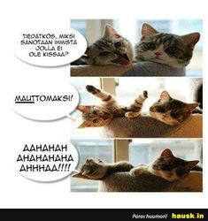 Cat Quotes, Cats And Kittens, Humor, Memes, Animals, Lifestyle, Animales, Animaux, Humour