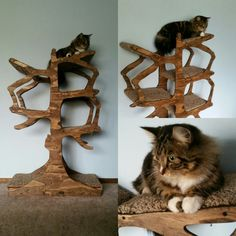 Turn your cat into a lover of functional art with this tree inspired cat tree. This handmade cat tree is exactly what your cat has been looking for, and will add a… Sisal, Home Design, Stop Cats From Peeing, Cat Shelves, Pet Furniture, Unique Furniture, Rustic Furniture, Modern Cat Furniture, Furniture Removal