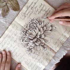 Chrysanthemum. Sketching. More my sketches — #limkina_sketches ∞