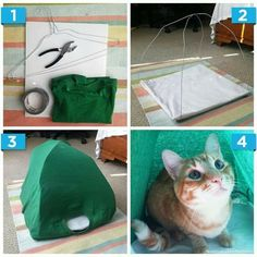 cat tshirt tent - Google Search