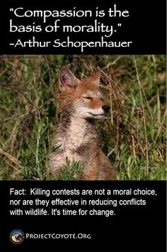 Help Ban Wildlife Killing Contests in CA ~ Your Voice Needed! Time For Change, Win Prizes, Coyotes, Animal Totems, Take Action, Your Voice, Predator, Safety, Wildlife
