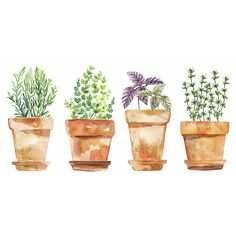 The Watercolor Potted Herbs Vinyl Wall Decals from Roommates adds some color and flair to your walls. Complete with 4 decals, this wall sticker set is a fun and creative way to transform any room. Peel & stick to apply. Watercolor Paintings For Beginners, Watercolor Projects, Watercolor Plants, Beginner Painting, Watercolor Cards, Watercolor Illustration, Watercolour Painting, Herbs Illustration, Watercolors