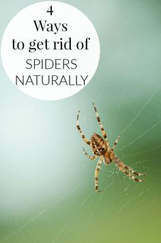 Spring is just around the corner.  Here are 4 ways to GET RID OF SPIDERS NATURALLY!