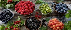 Om bærkurven eller fryseren er full av bær, så kok noe hjemmelaget. Å sylte og safte selv er nemlig på vei til å bli trendy igjen. Her finner du oppskriftene og nyttige tips å ta med på veien, enten du skal koke hjemmelaget syltetøy, gelé eller saft.