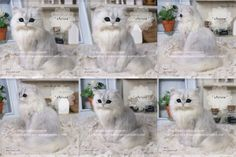 Stunning and sweet - needle felted cat by Cherisa from Japan
