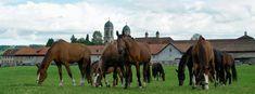 Marstall Kloster Einsiedeln, Pferdezucht Kloster Einsiedeln - Ybrig (de) - Veranstaltungen & Sehenswertes - Sehenswürdigkeiten - Veranstaltungen & Sehenswertes