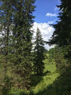 Uralter Fichtenwald. #gartenblog #urwald #spaziergang Mountains, Nature, Travel, Natural Garden, Shade Perennials, Things To Do, Naturaleza, Viajes, Destinations