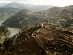 Though other wines may try to claim the name, the world's true ports are born only in this scenic, 70-mile (113-kilometer) stretch of vineyards along Portugal's Douro River Valley, where grapes have been grown for some 2,000 years.
