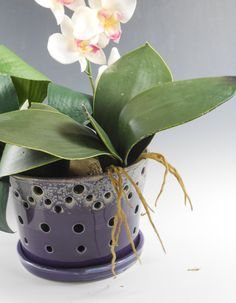 Large purple orchid pot  orchid cache pot  by TamarackStoneware
