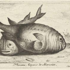 Twee bruinvissen op het strand, Albert Flamen, 1664 - Rijksmuseum