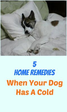 5 Home Remedies For When Your Dog Has A Cold ... see more at http://PetsLady.com ... The FUN site for Animal Lovers