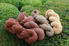 Dye from Horse Chestnut hulls Natural Dye Fabric, Natural Dyeing, Fibre And Fabric, Chestnut Horse, How To Dye Fabric, Hand Dyed Yarn, Yarn Colors, Horses, Nature
