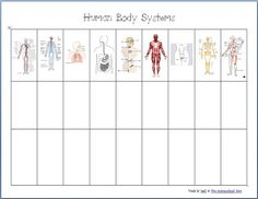Gr 4 - 6: Body systems printable worksheets AND a great list of hands on activities related to body systems