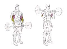 Workouts To Build The Biceps And Triceps Body Building Tips, Building Logo, Get Bigger Arms, Powerlifting Training, Barbell Curl, Biceps And Triceps, Bodybuilding Training, Muscle Groups, Workout