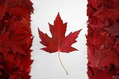 Children's books from Canadian authors or about Canada! Children Books on Canada** Happy Birthday Canada, Happy Canada Day, Barbados, Calgary, Montreal, I Am Canadian, Canadian Things, Canadian Flags, Canadian Maple